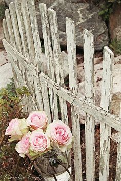 <3 ~ <3 A very old picket fence and roses are the way to make this old woman smile again