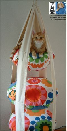 A Cat Trapeze - looks like good times for the cat; a fun diy