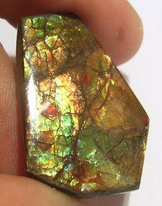 Canadian Ammolite freeform gemstone