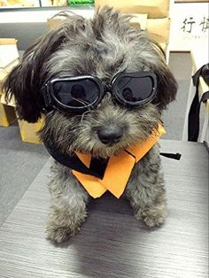 f8de3e891cdc Dog Goggles - Small Dog Sunglasses Waterproof Windproof UV Protection For  Doggy Puppy Cat - Black