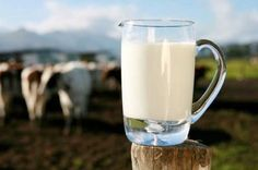 """Milk--one of the most controversial topics in the health food world. Some """"experts"""" recommend raw milk, some adamantly warn of the dangers of it, and some say milk is only for babies. Raw Cheese, Valeur Nutritive, Cheese Lover, High Calorie Meals, Fresh Milk, Gluten, Goat Milk, Paleo Diet, Superfood"""