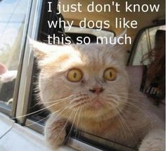 Funny cat .Do'in What Dogs Love.