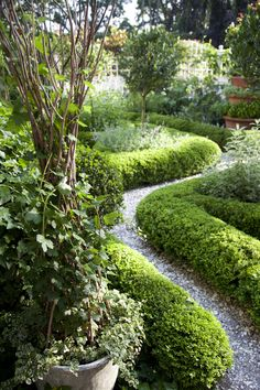 Boxwood hedges—whether rounded, squared off, or snaked through other borders—can add charm to any country garden. To see six more features every country garden needs, check out an excerpt from Charlotte Moss' book Garden Inspirations.    - CountryLiving.com