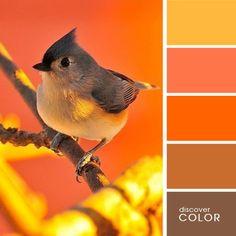 Оранжевые тона | DiscoverColor.ru Orange Shades