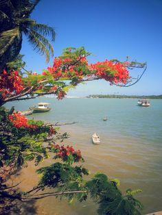 Barra do Cunhau' perto de Natal (Rio Grande do Norte) Brasil.