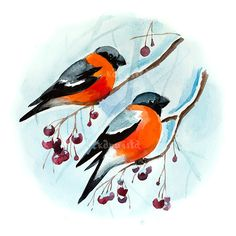 Bullfinches birds on branch Digital Download Art printable, blue and... ($5) ❤ liked on Polyvore featuring home, home decor, wall art, red painting, bird wall art, tree branch painting, blue wall art and blue bird wall art