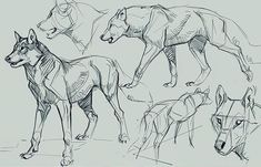Animal Sketches, Animal Drawings, Cool Drawings, Art Sketches, Art Reference Poses, Drawing Reference, Mom Drawing, Drawing Eyes, Figure Drawing
