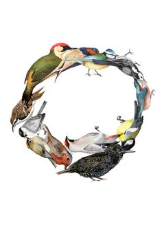 Bird Wreath - Jessica Lennose Perspective Art, Night Owl, World Of Color, Animal Pictures, Illustrators, Book Art, Creatures, Birds, Wreaths