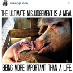 Animals are NOT food! Go vegan. Learn reverence for life. Take a stand against exploitation.