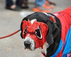Pet costume walk returns for 12th year