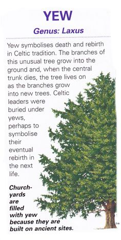 "My family name means ""yew tree"" and I can't think of a more appropriate tree to transform into :)"