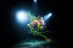 Azuma Makoto suspends bouquets in the depths of a deep sea