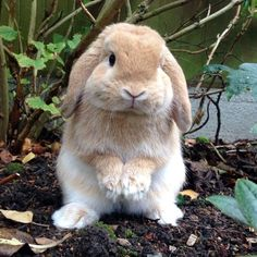 19 Things Every Bunny Lover Understands Cute Baby Bunnies, Funny Bunnies, Cute Babies, Animals And Pets, Funny Animals, Fluffy Bunny, Tier Fotos, Cute Little Animals, Cute Animal Pictures
