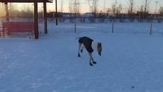 Snow zoomies stolen from Top Funny, Hilarious, Best Fails, Fail Video, Funny Fails, Animated Gif, Cool Stuff, Funny Stuff, Gifs