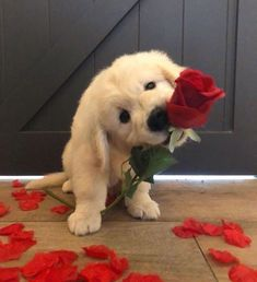 """Uploaded by Idalie Sandoval - The Bachelor Australia"" art breeds cutest funny training bilder lustig welpen Cute Baby Dogs, Baby Animals Super Cute, Super Cute Puppies, Cute Funny Dogs, Cute Little Puppies, Cute Dogs And Puppies, Cute Funny Animals, Doggies, Puppies Puppies"