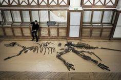 """Muséum,l'art et la manière de """"remonter"""" un dinosaure :https://bookingmarkets.net/fr/museumlart-et-la-maniere-de-remonter-un-dinosaure/"""