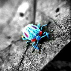 #bug #insect #macro #blue #black #forest #indonesia