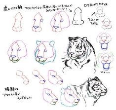 ImageFind images and videos about black and white, animal and sketch on We Heart It - the app to get lost in what you love. Anatomy Drawing, Cat Drawing, Drawing Sketches, Tiger Face Drawing, Tiger Illustration, Animal Sketches, Animal Drawings, Tiger Drawing Tutorial, Tiger Sketch