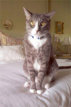 My cat Harry. Jennifer, Oceanside, CA - 7/26/2015