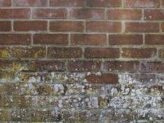 Traiter Les Murs Contre L Humidite Mur Poreux Friable Avec Mousses Etc Leroy Merlin Humidite Mur Enlever Les Moisissures Mousse