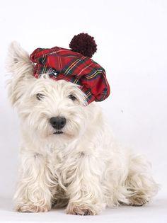 Tweed Hund Weihnachtsmütze Tweed Hund Mütze schottische