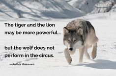 The tiger and the lion may be more powerful... but the wolf does not perform in the circus.