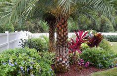 aménagement jardin avec plantes exotiques