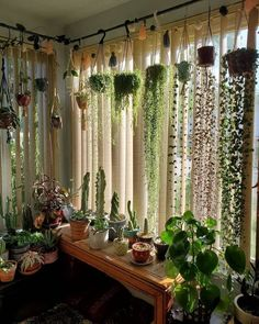 Room With Plants, House Plants Decor, Patio Plants, Indoor Plant Decor, Plant Rooms, Best Indoor Hanging Plants, Potted Plants, Green Plants, Shelves With Plants