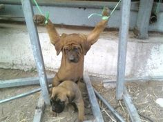 South Korea: Please stop the torture and consumption of dogs and cats.    5,000 dogs EVERY DAY are tortured and killed in 11 countries around the world; many are baked or boiled ALIVE.  Please help end the horrific torture of innocent dogs and cats by signing this and other petitions!