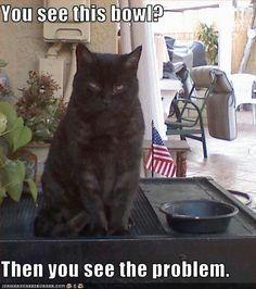 Cats - empty bowl