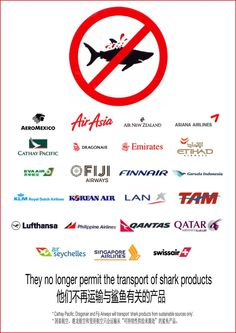 Another Major Airline Bans Shark Fins … Who's Next?  OCEAN FORCE supports #ProjectAWare  www.beadcoalition.com