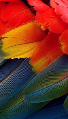 Bright feathers ...