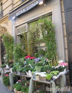 Rosa Luna, Where Flowers Are Always Extra Special: travel-musts to have fresh flowers in hotel... Paris has the most spectacular flower shops in the world, and Rosa Luna on the Boulevard Raspail is a favorites. The selection is always fresh and beautiful... and the roses are beyond amazing!