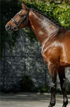 Старинная национальная конная игра является продолжением венгерских спортивных и национальных традиций Horses, Animals, Full Moon, Animales, Animaux, Animal, Animais, Horse