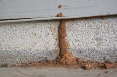 Termite tunnel on the foundation