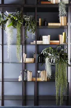 Tortona Shelving system in patinated bronze lacquered metal. 8mm bronze stopsol or extralight transparent tempered glass shelves.
