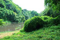 bosque habana 4