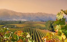 The venerable vineyards of Chile's Colchagua Valley lie 81 miles south of Santiago and are known for their superb red wines—particularly Cabernet Sauvignon. #Colchagua