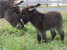 Baby donkey :) - Imgur