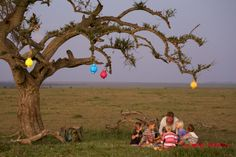 Kids enjoying a picnic under an acacia tree in the Naboisho conservancy. Kenya kids safari holidays.