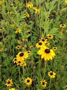 Irvine Nature Center gardens, Baltimore County, Maryland