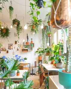 Green Inspiration   We love @wildernisamsterdam a beautiful shop in the Netherlands that we'll have to get around to visiting one of these days! Hope you're all having a wonderful sunny Sunday plant-ees!   by plantbypackwood
