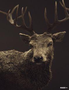 deer by ondrej hosek, via Behance