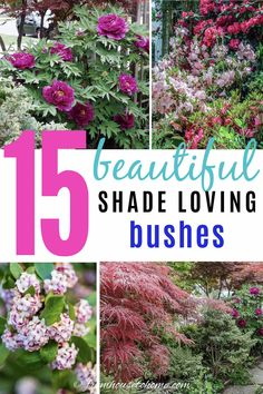 Find out which bushes to plant under trees in the shade garden in your backyard or front yard. These shrubs will help to brighten up your yard. #fromhousetohome #bushes #shade #gardeningtips #gardening #gardenideas Best Shrubs For Shade, Shade Loving Shrubs, Shade Shrubs, Shade Garden Plants, Shade Perennials, Garden Trees, Garden Bed, Garden Shrubs, Garden Landscaping