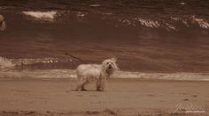 Perrito en la playa. Horses, Animals, Diy Dog, White Photography, Doggies, Beach, Fotografia, Animales, Animaux