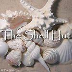 Seashell Christmas Scallop Ornament Party Tropical Beach Holiday Wedding OOAK | eBay