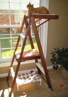 Bir köşeye atılmış merdiveni değerlendirmenin en rahat yolu, tabii ki de kedi yatağından geçiyor.