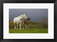 Mare+and+Foal,+Co+Derry,+Ireland+at+FramedArt.com