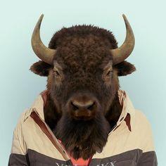 yago partal - zoo portraits - bison