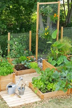 Raised bed gardens with trellis for vertical growing